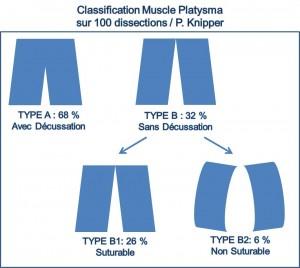 Classification Platysma