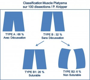 Classification Platysma